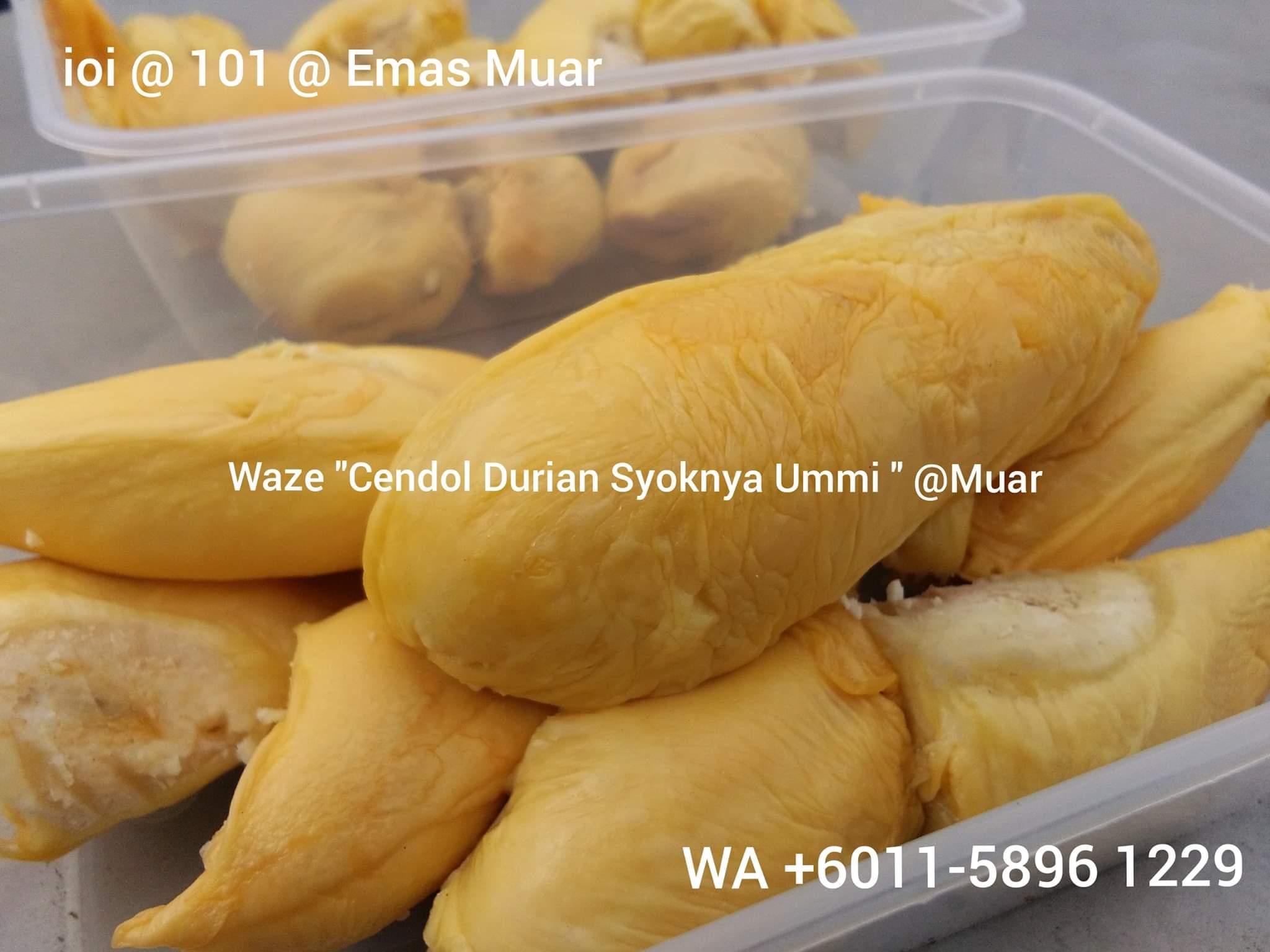Pembekal isi durian frozen Johor