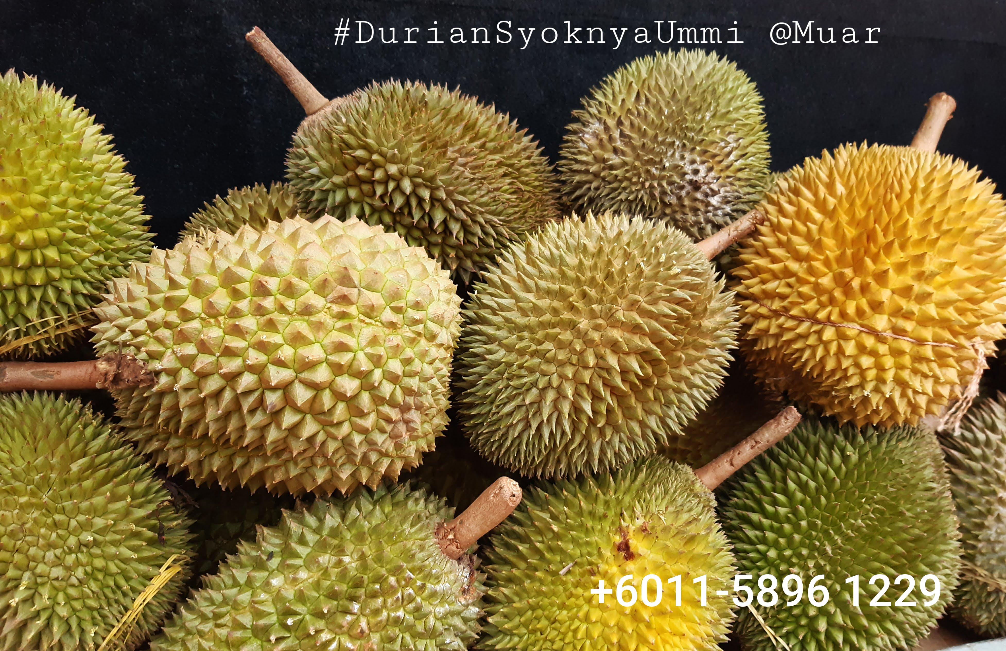 Pembekal durian muar 2019